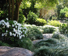 Japanese garden ideas. Nz landscape designers. Auckland NZ. Landscapers.