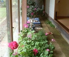 Indoor Garden Design for Home and Apartment Interior Greening Ideas on vithouse.com