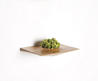 Plant Pods by Domenic Fiorello Bring a Touch of Nature Home