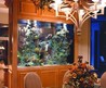 Aquarium Design Ideas For Your Home Decor