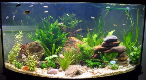Idee Di Decorazione Acquario, Aquarium Decorating Tips