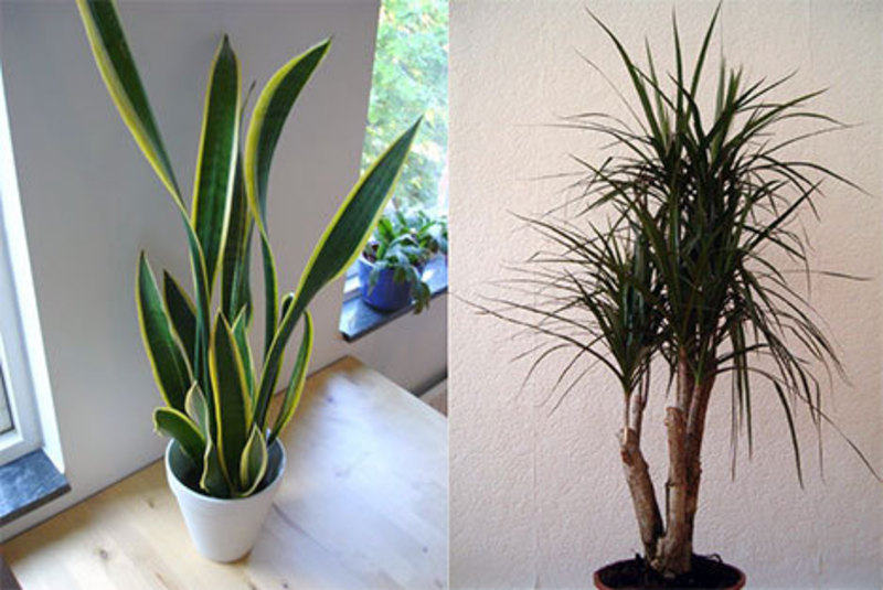 House Plants Decoration, Indoor Plants