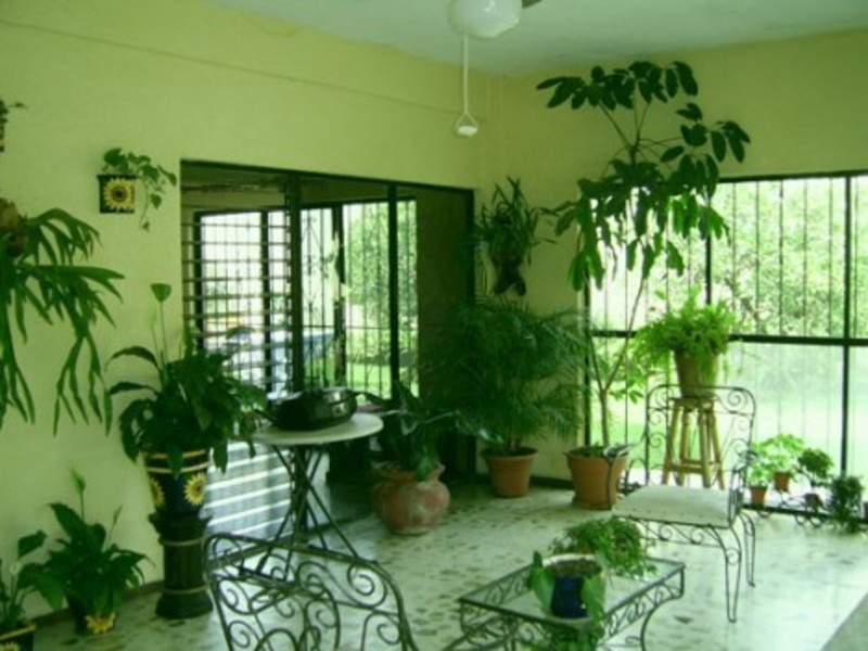 House Plants Decoration, Room Interior Design with Indoor Plants Decor Ideas at Home Decoration