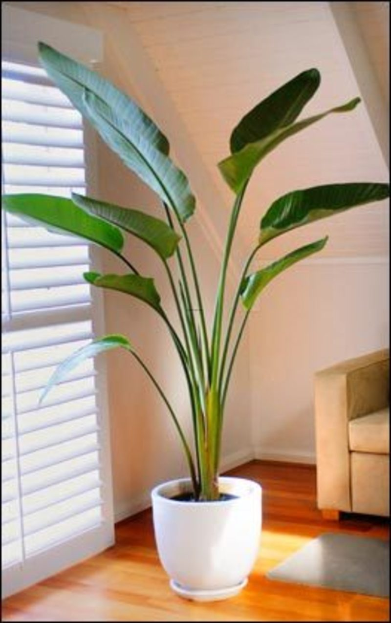 Indoor plants design bookmark 2061 Large house plants