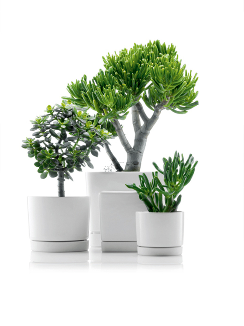 Minimalistic black and white flowerpots from bodum and for Modern indoor plants
