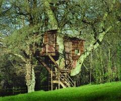 Make your own Magical Tree House Plans
