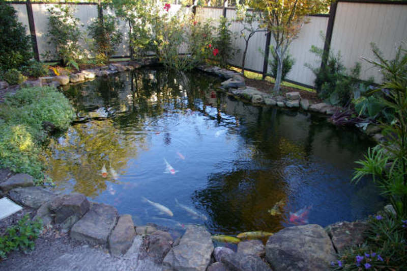 Coy fish pond design bookmark 2242 for Garden pond videos