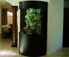 Aquarium Ideas for Home
