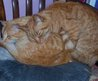 We Three, Ginger cats tales: The house under water.