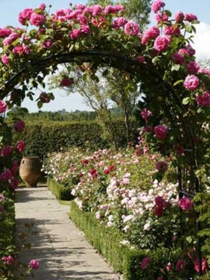 Interior ideas rose garden ideas pictures for Garden design with roses
