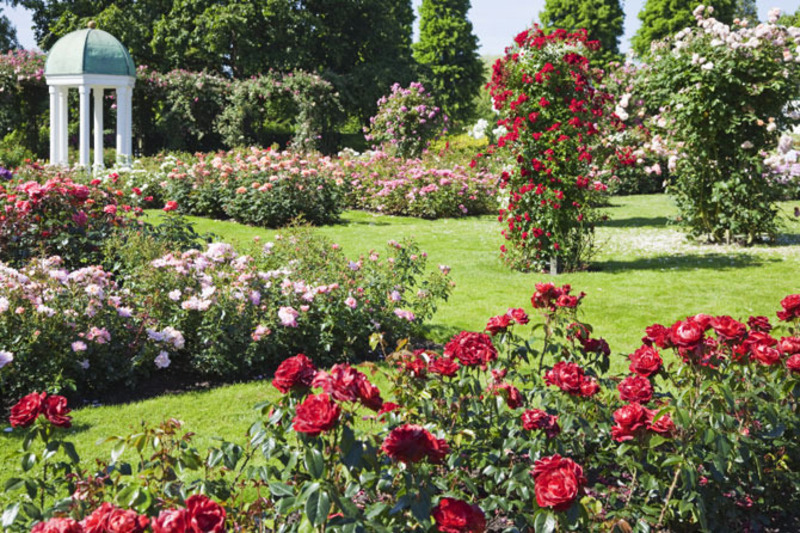 Rose garden design bookmark 7600 for Garden design with roses