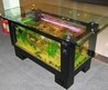 Incredible Coffee Table Aquariums