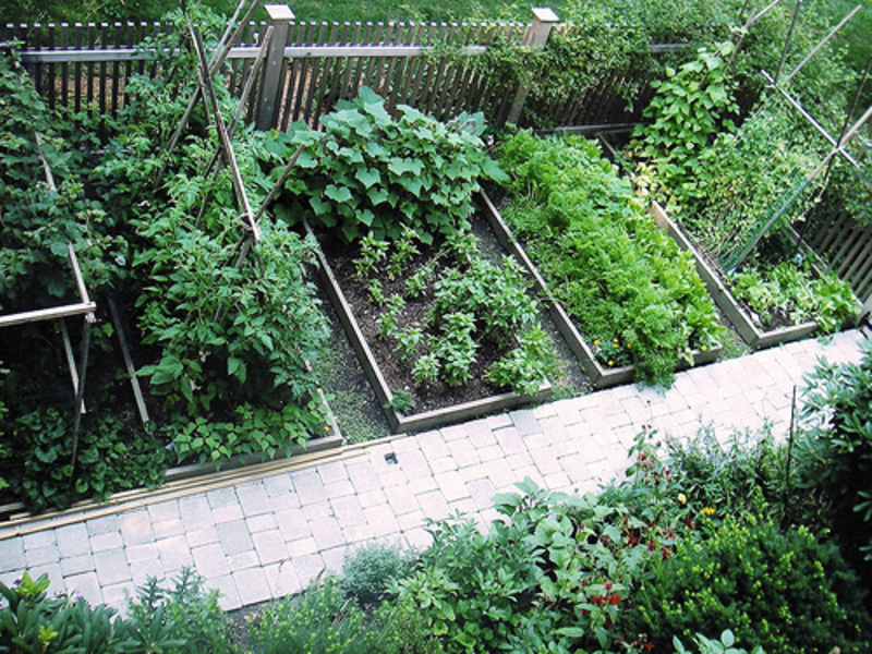 Garden design bookmark 7671 for Small backyard vegetable garden design