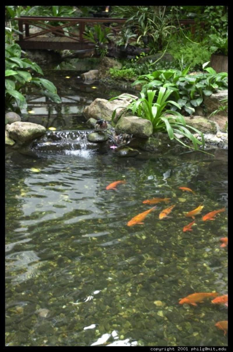 peace meditation nearby beautiful koi fish pond design