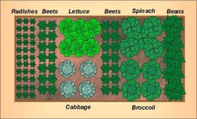 Veggie Patch Layout Of Garden Designs And Layouts From The Home Garden Gardening