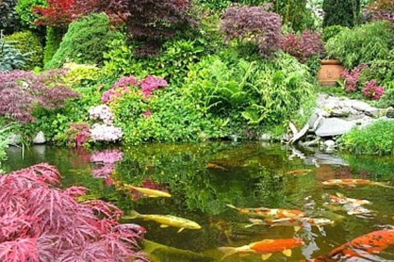 Do it yourself right now how to design a garden fish for Do it yourself fish pond