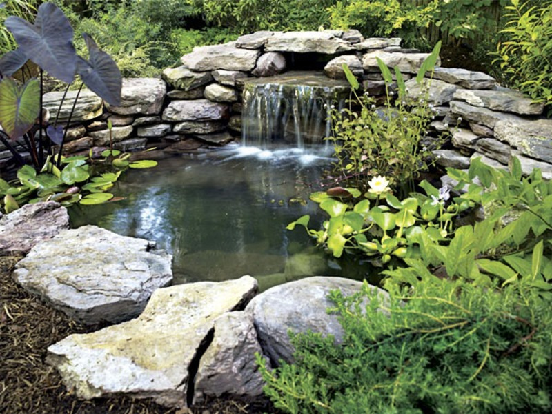 Backyard fish ponds design bookmark 11195 for Backyard koi pond designs