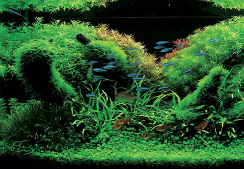 Idee Di Decorazione Acquario, Aqua Forest Aquariums Look Gorgeous