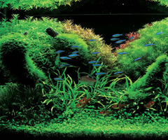 Aqua Forest Aquariums Look Gorgeous