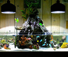 Aquarium Decoration Tips »  Decoration Trends