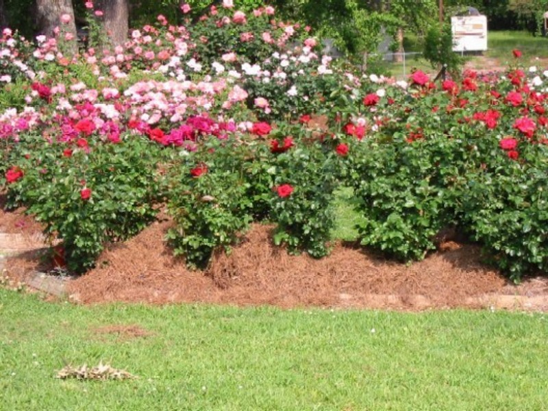 Small Rose Garden Design Ideas