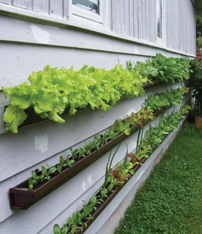 Gutter gardens grow produce without taking up space for Small vegetable garden
