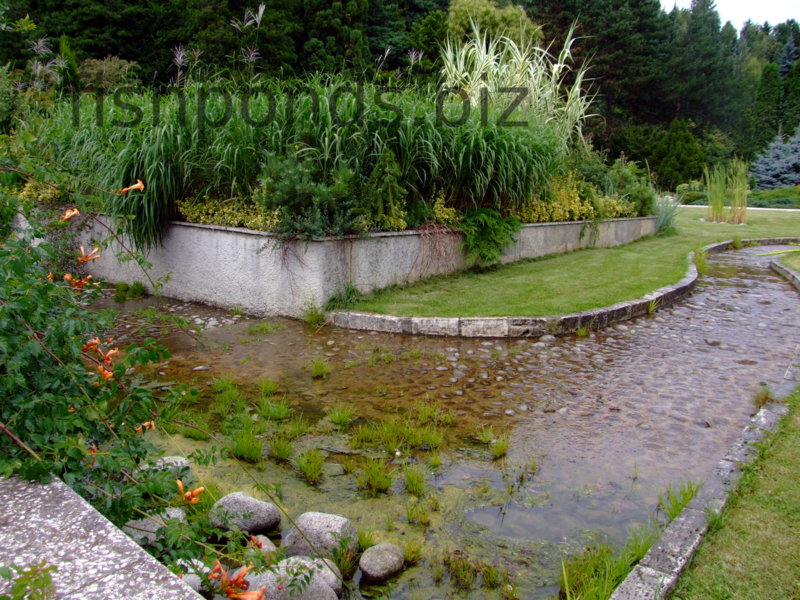 Fish pond design ideas design bookmark 11967 for Types of pond design