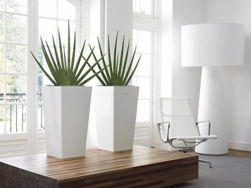Indoor plant hire melbourne design bookmark 12023 for Modern indoor plants