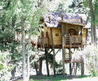 Small And Artistic Tree House Design By Green Line Architects/ Home Trends
