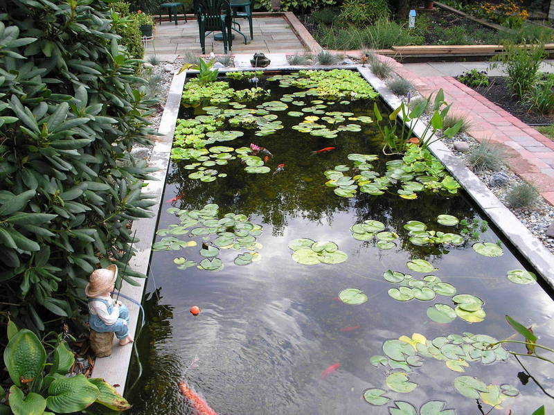 Big koi fish pond design ideas home trend and design for Koi fish pond garden design ideas