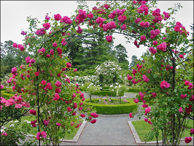 Rose garden ideas pictures home ideas modern home design for Rose garden design