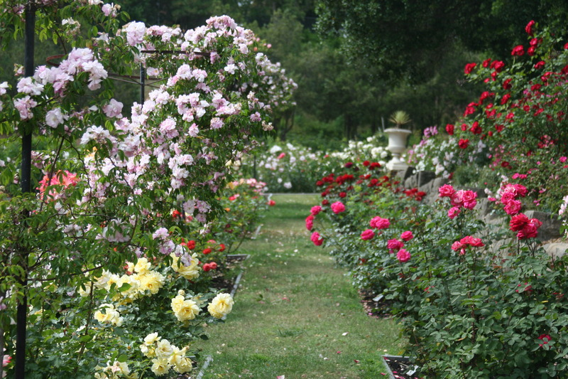 Rose garden ideas pictures inspiration interior designs for Garden design with roses