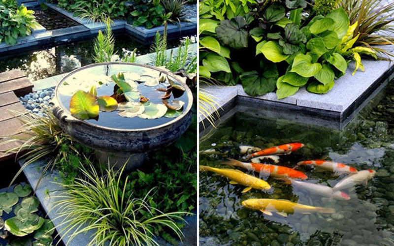 Fish Pool Design Creating Pond In Garden House Luxury And