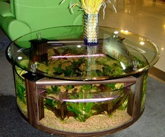 Coffee Table Aquarium Design Ideas2