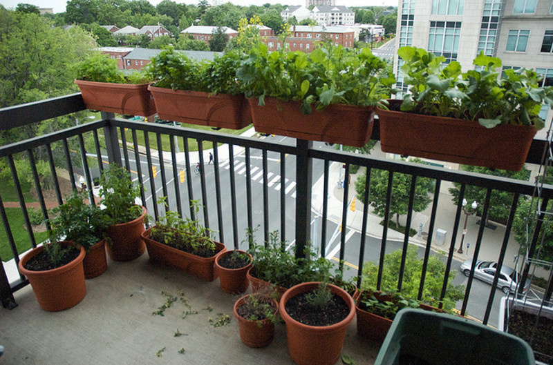 Apartment Balcony Vegetable Garden