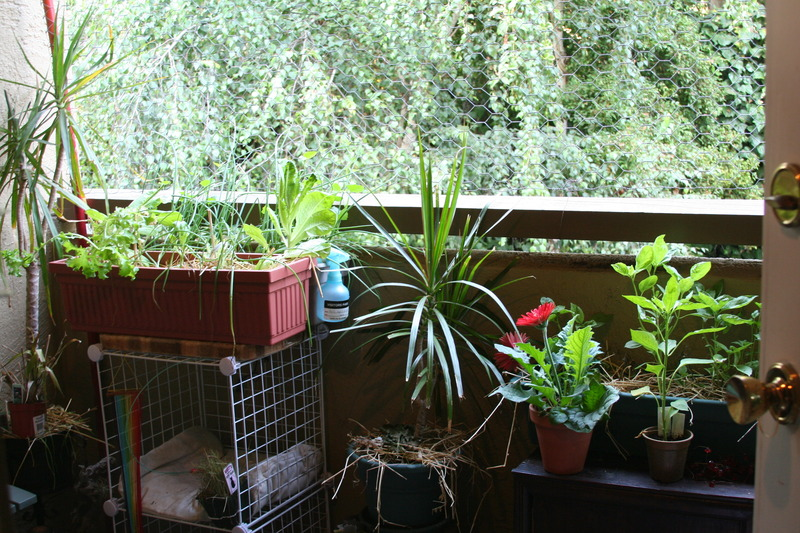 Balcony garden ideas pictures tips for a flourishing container garden