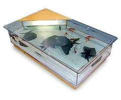 Aquarium Coffee Tables