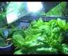 Indoor Garden Lighting With Interior Designs / Pictures Photos Designs And Ideas For House Home Office