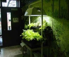 Indoor Home Garden Tips