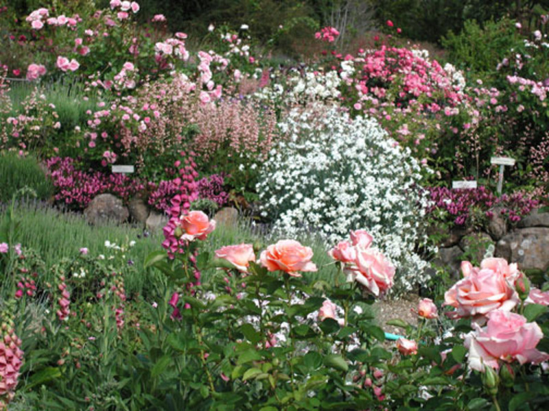 Rose Garden Ideas Pictures Native Garden Design