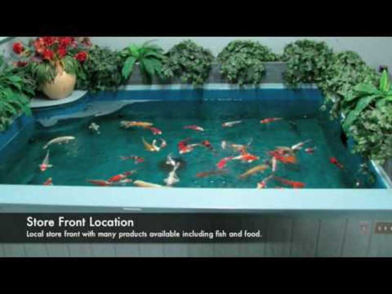 How to install a koi fish tunnel set rock as walls in your for Koi fish swimming pool