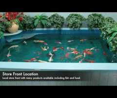 How To Install A Koi Fish Tunnel Set Rock As Walls In Your Pond