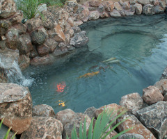Make Your Garden Looks Amazing By Constructing Fish Ponds Design