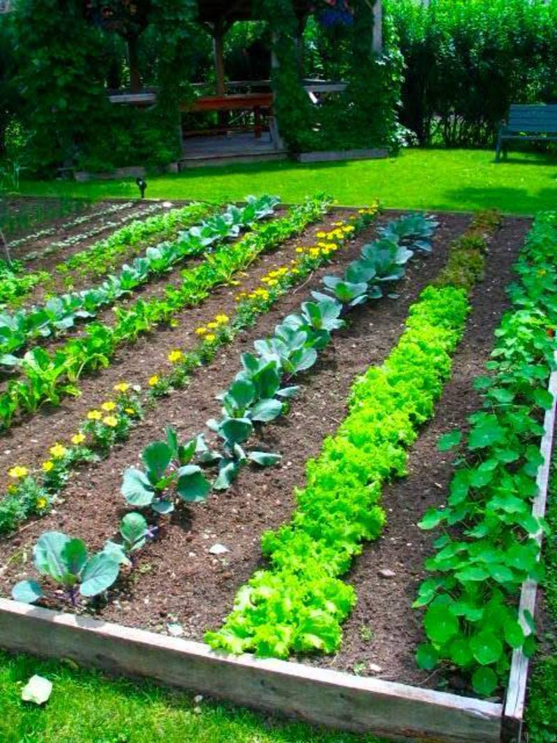 Rustic vegetable garden ideas home ideas modern home for Planting a small vegetable garden layout