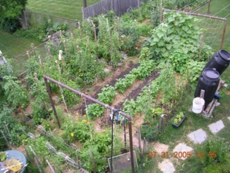 Backyard Vegetable Garden Layout : Small Vegetable Garden Design, Backyard Vegetable Garden Design