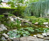 Fish Pond Water Features Design, Pictures, Remodel, Decor And Ideas