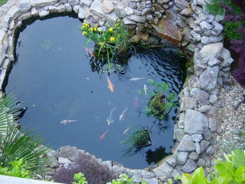 Fish Pool Design, Koi Fish Pond Koi Fish Pond Design – Appliance In Home