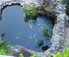 Koi Fish Pond Koi Fish Pond Design  Appliance In Home