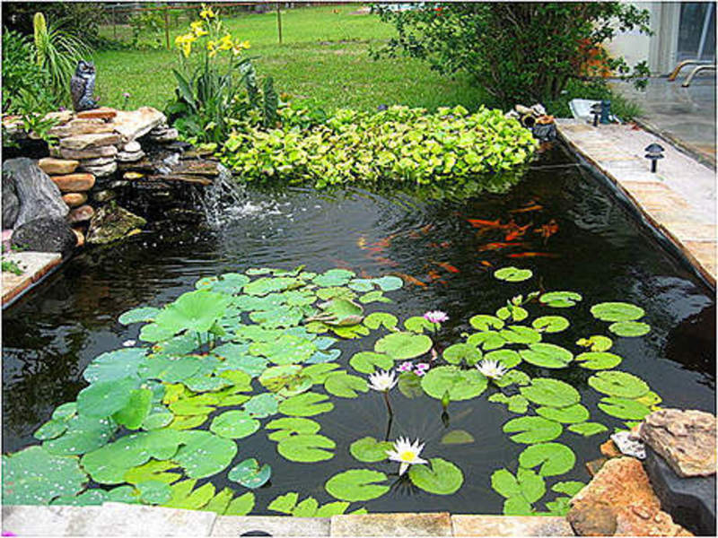 Koi fish pond design design bookmark 15919 for Koi pond pool