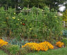 Vegetable Gardens, How To Grow Vegetables